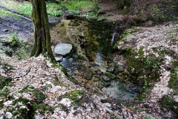 Źródło rzeki Kamienna - Biały Stok