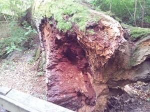 Martwe drzewo