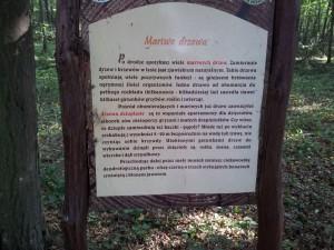 O martwych drzewach