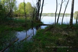 Wypływ Brdy z jeziora Smołowego